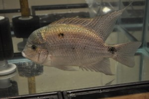 Beautiful Show Fish